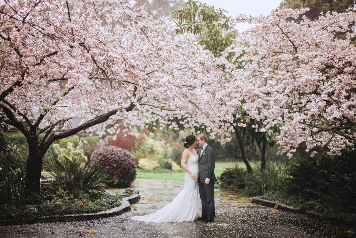 bride and groom standing under a cherry blossom tree