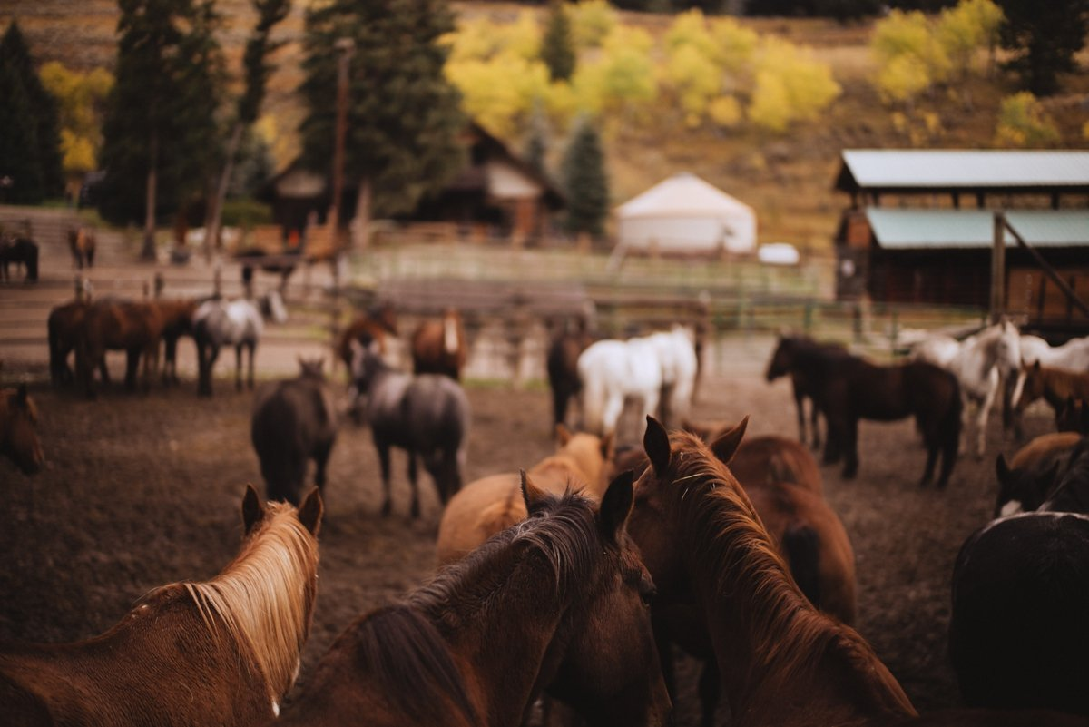 lone mountain ranch beautiful country photos boseman montana horse country leica photography national geographic lodge