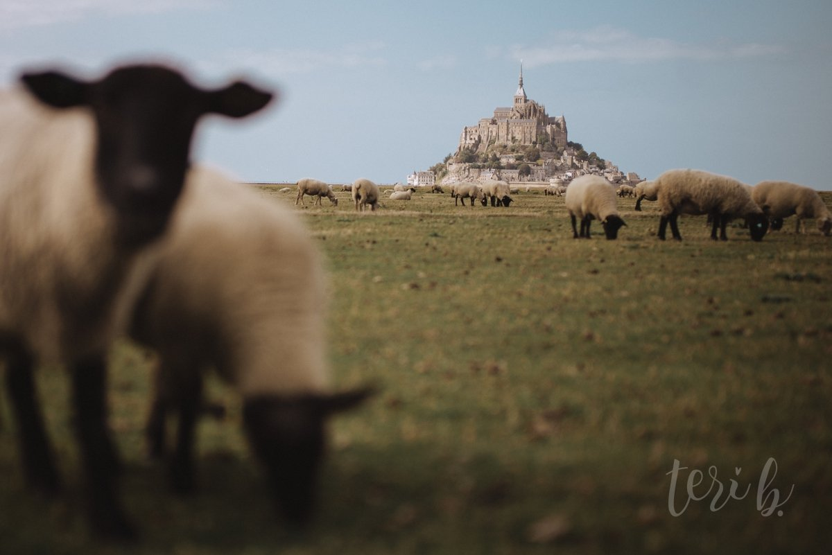 mont st michel sheep normandie france moody soulful photography teri b destination inspiration 13