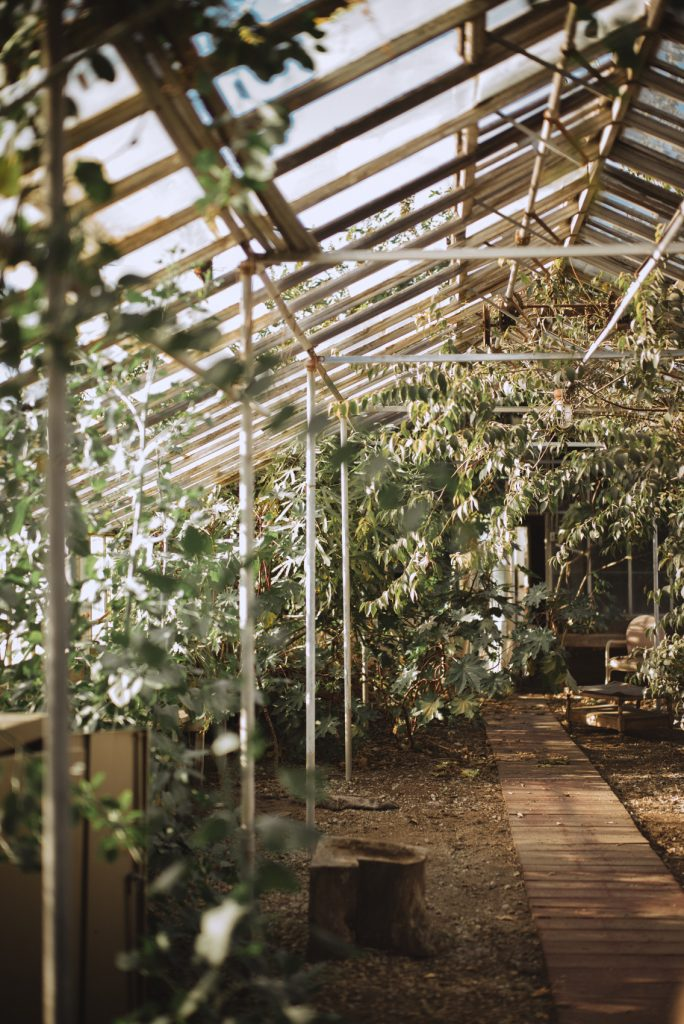 lanterman abandoned pomona greenhouse urban exploring california los angeles photography leica teri b