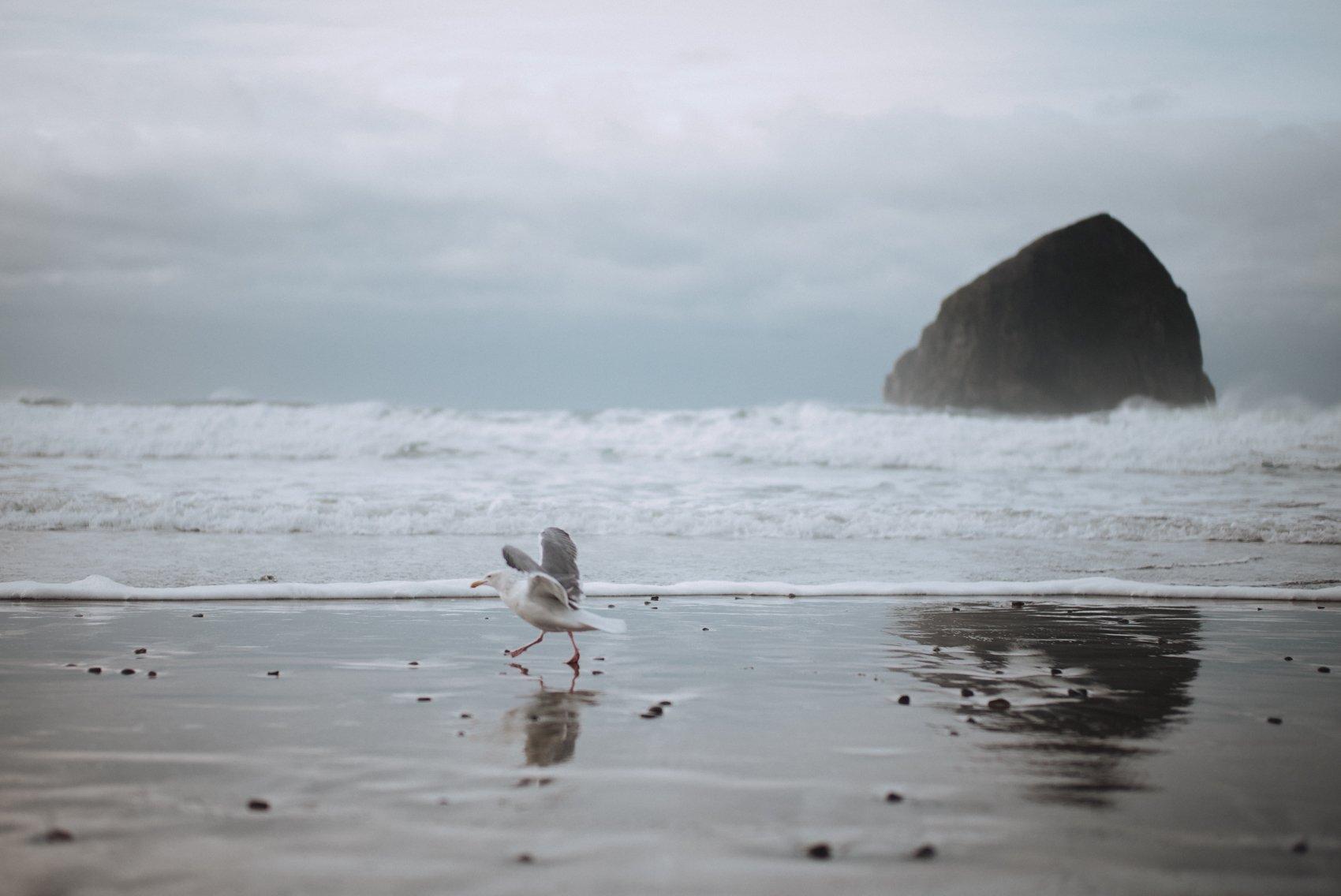 oregon coast photos nature inspiration elopement destination pacific northwest is beautiful